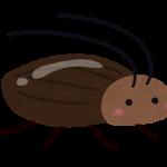 ゴキブリが一匹いたらあと何匹いるの?対処法のご紹介♪