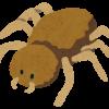 家の中にでかい蜘蛛が出た!退治する前に読んでください♪